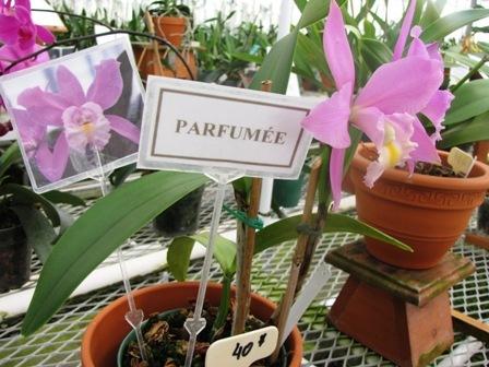 orhidee-1