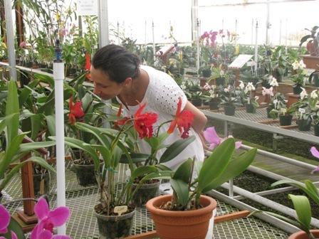 orhidee-2